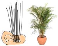 耳毛と観葉植物